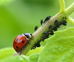10 Beneficial Insects You'll Want In Your Garden & Vegetable Plot