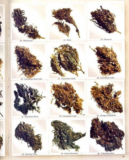Some of the top cannabis strains from