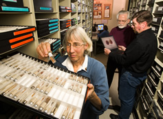 Amy Rossman, Joe Kirkbride and Bob Gibbons identify a seed sample. Link to photo information
