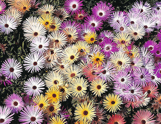 long lasting and easy to care for flowers