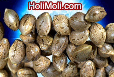 Fort Collins weed seeds delivery