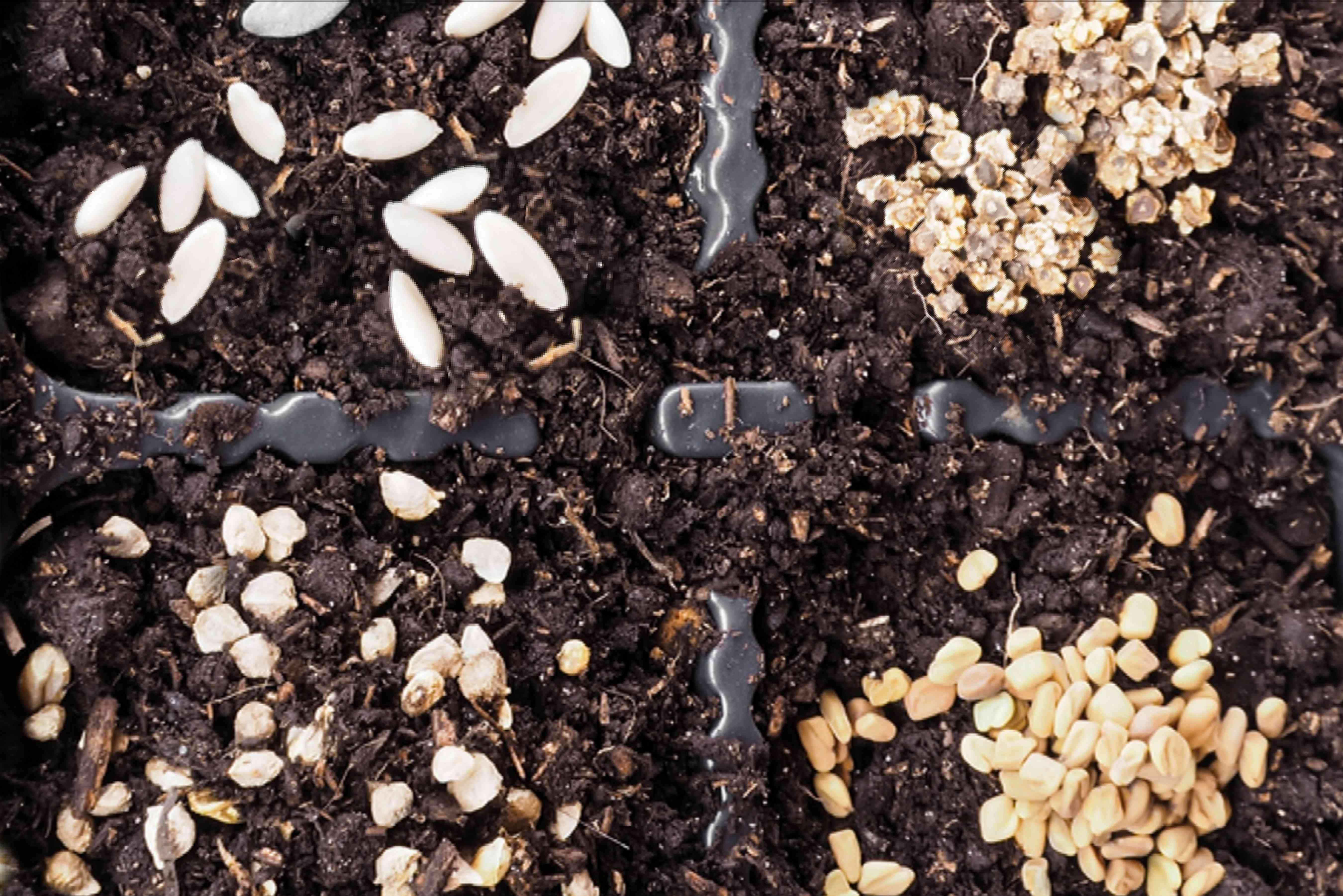 too many seeds in a planting tray