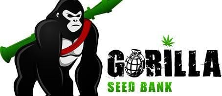 Gorilla Seed Bank Review – 9.1/10 Star Rating by 2,200+ Customers