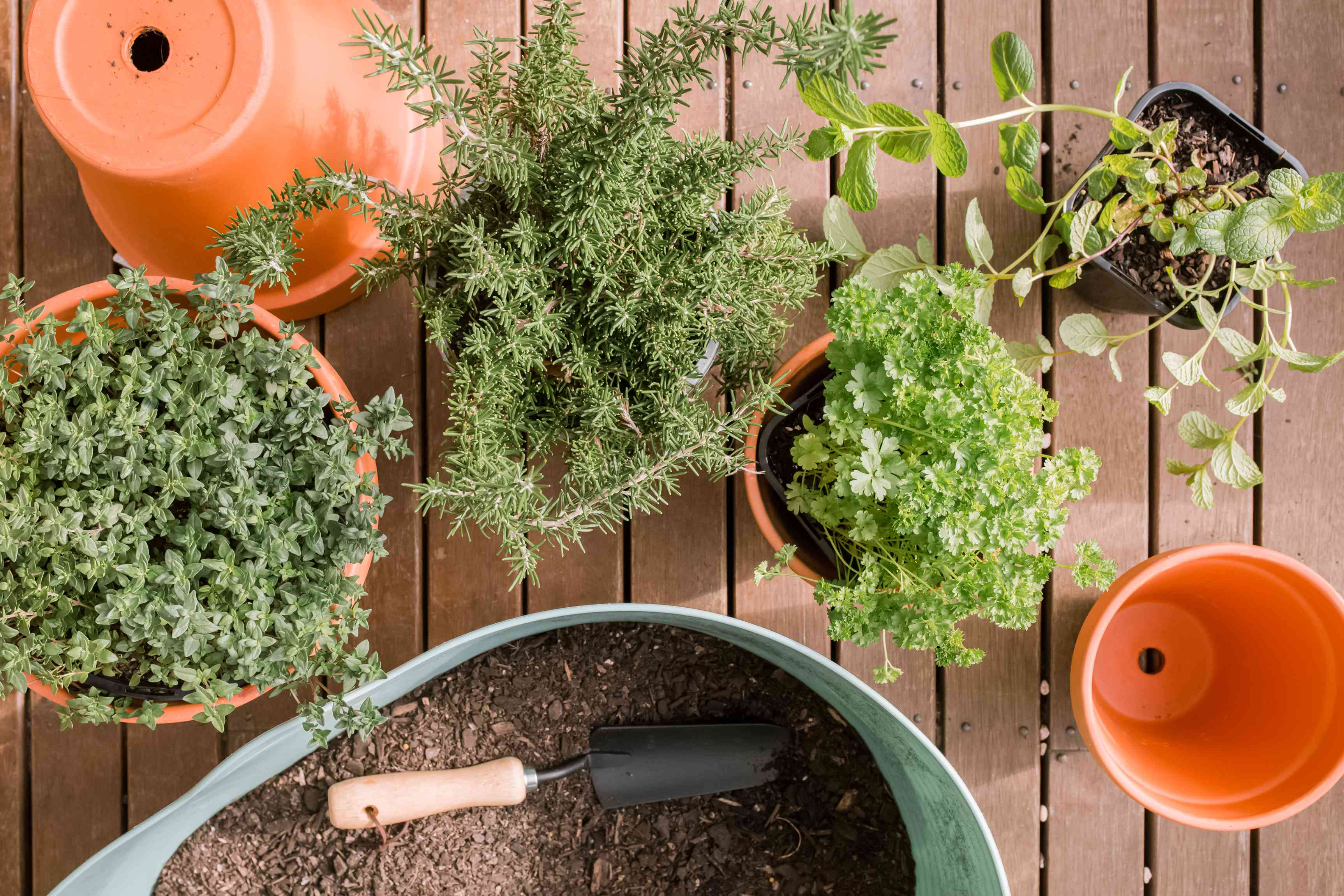 herbs in pots next to a large container