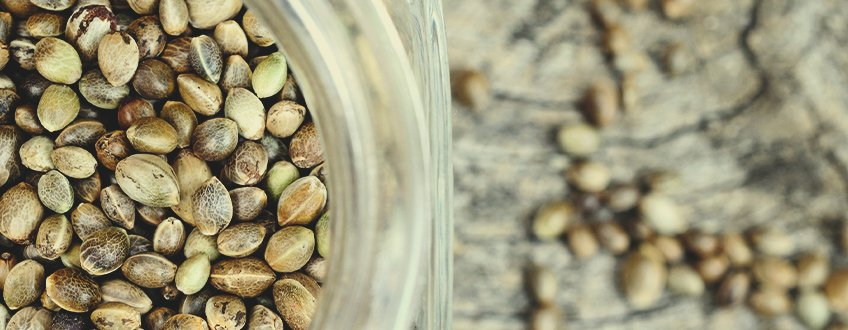 How To Properly Preserve Cannabis Seeds