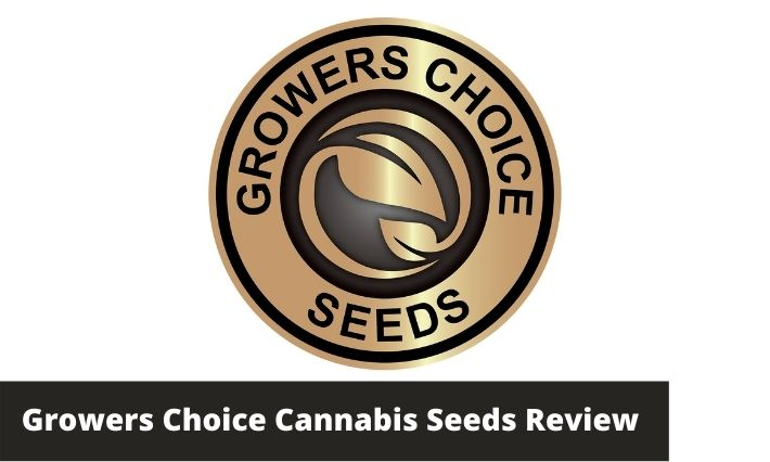growers choice seeds cannabis seeds review