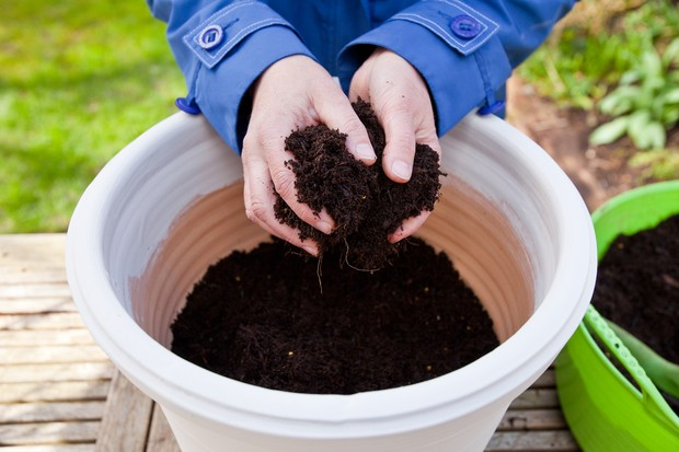 How to sow seeds direct into pots - adding compost to the pot