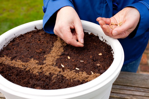 How to sow seeds direct into pots - sowing seed on the surface