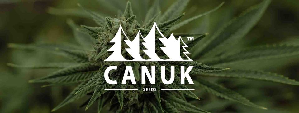 Canuck Seeds review