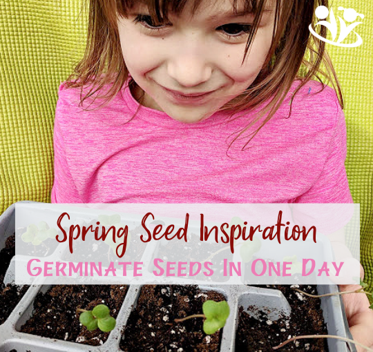 How to germinate seeds in one day #seeds #spring #science #handsonlearning